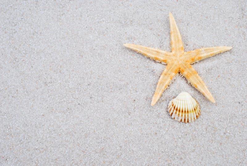Coquille de mer sur le sable image stock