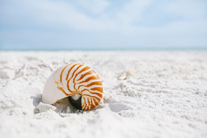 Coquille de Nautilus avec la vague de mer, plage de la Floride sous le ligh du soleil photographie stock libre de droits