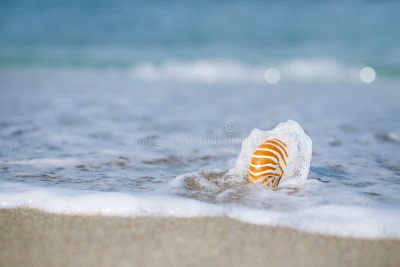 Coquille de Nautilus avec la vague de mer, plage de la Floride sous le ligh du soleil photos stock