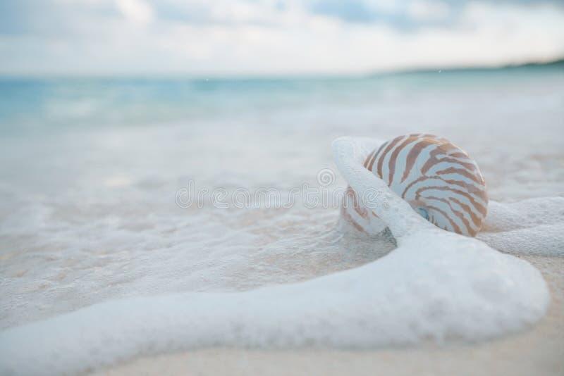 Coquille de Nautilus dans des vagues de mer, réel image stock