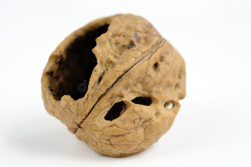 coquille de noix photo stock image du noix brun nourriture 11937556. Black Bedroom Furniture Sets. Home Design Ideas