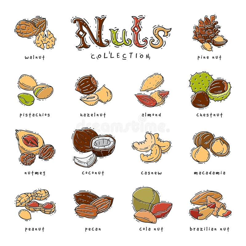 Coquille de noix d'écrous d'arachide et de châtaigne d'anarcadier d'ensemble d'illustration de nutrition d'amande et de noix de n illustration de vecteur