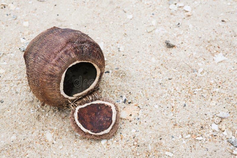 Coquille de noix de coco sur la plage photos libres de droits