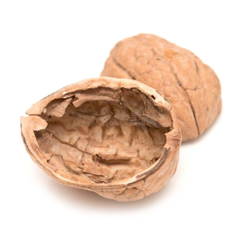 Coquille de noix vide image libre de droits