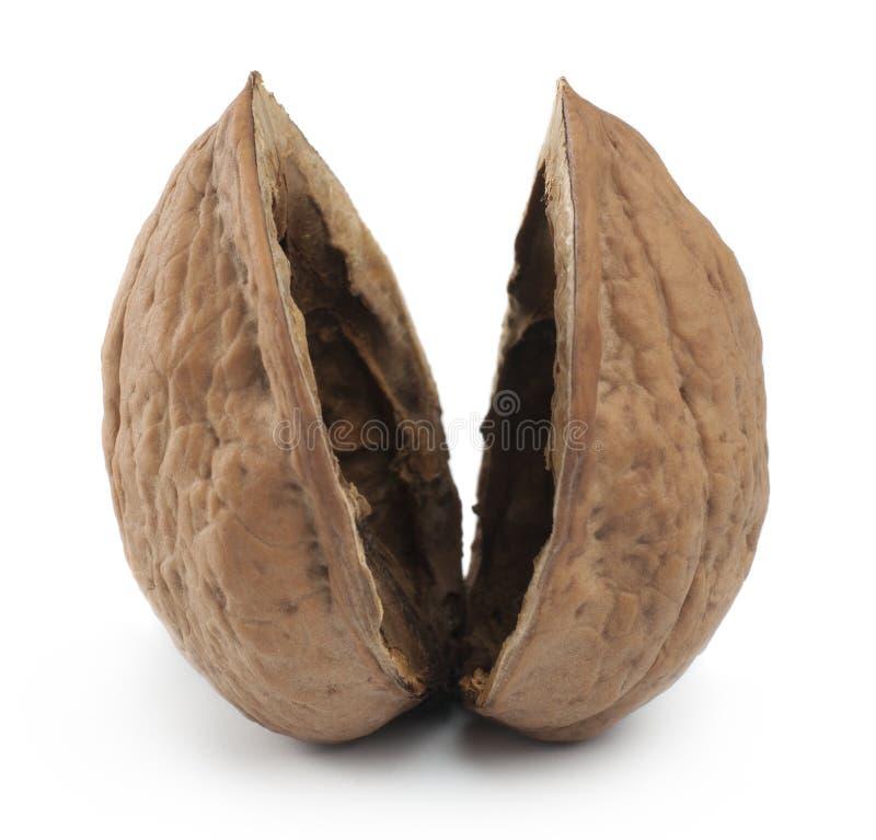 Coquille de noix vide photos libres de droits