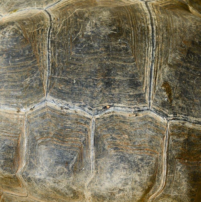 Coquille de tortue de Galapagos images stock