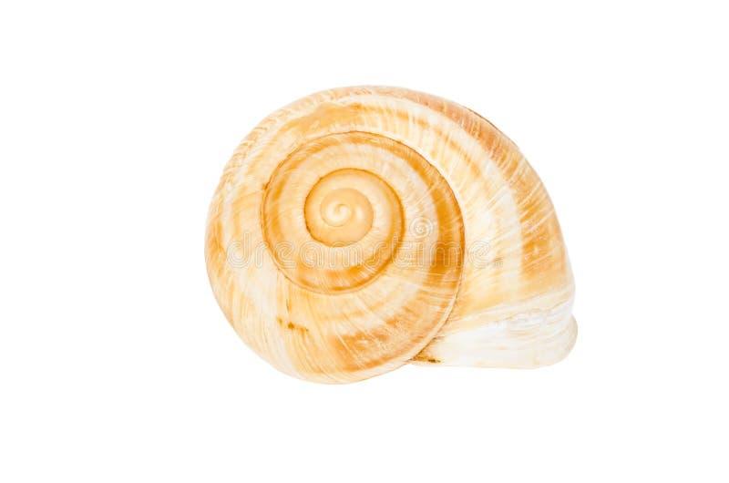 Coquille en spirale beige d'isolement photo stock