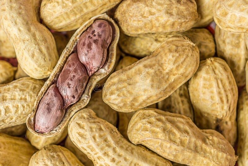 Coquille ouverte d'arachide photo stock