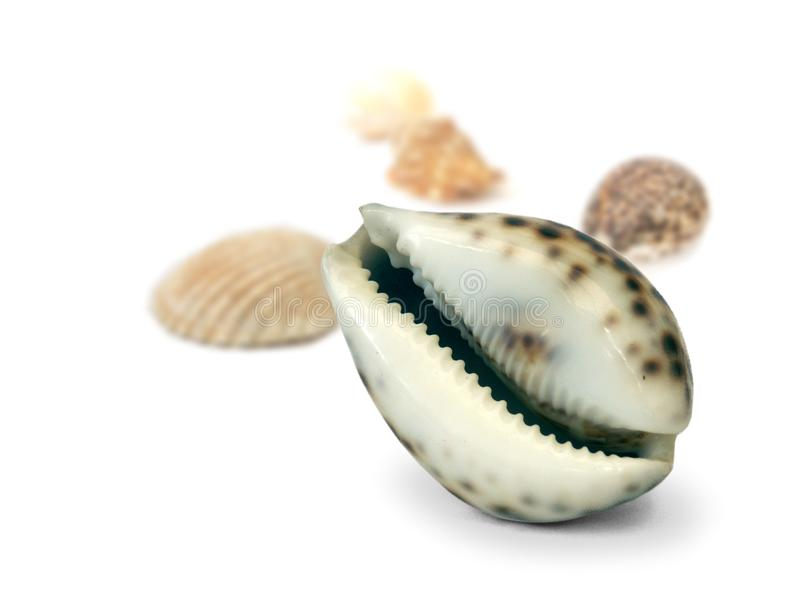 Coquilles image stock
