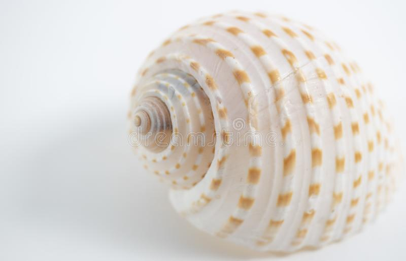 coquilles avec le fond blanc image stock