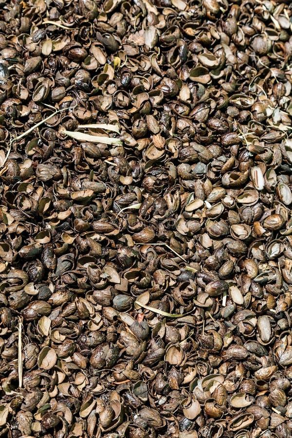 Coquilles cassées de noix de muscade photographie stock libre de droits
