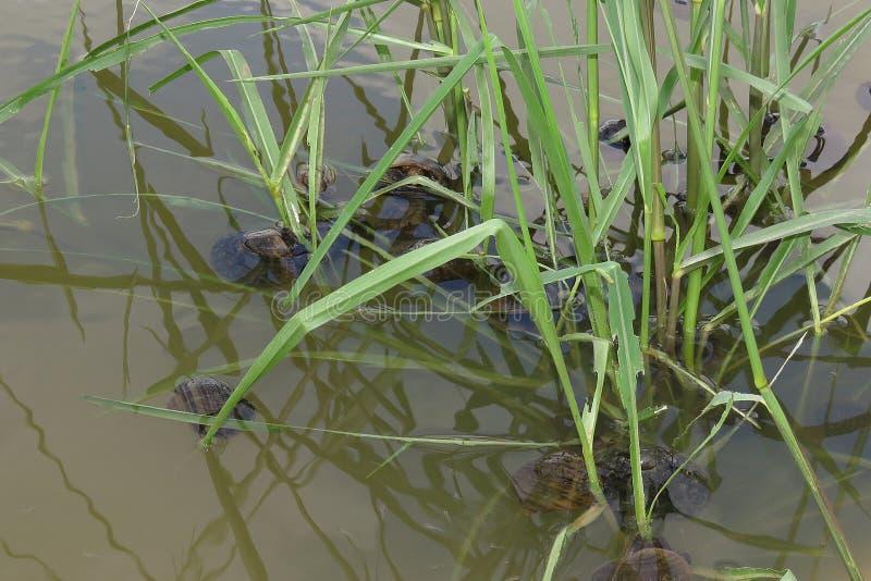 Coquilles, cerises dans des coquilles d'eau-cerise images stock