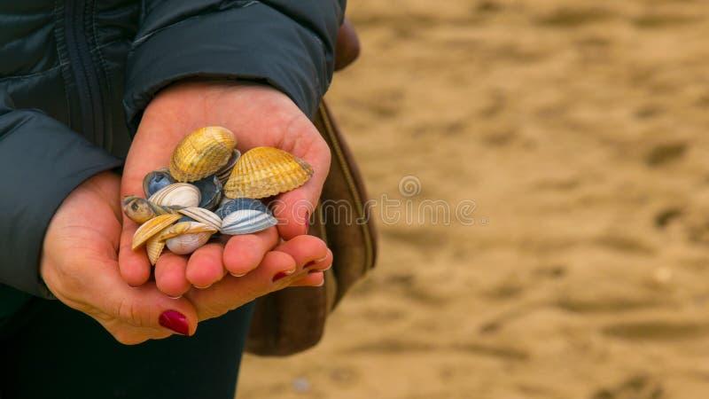 Coquilles colorées dans la paume d'une fille, sur une plage aux Pays-Bas, de la Mer du Nord photos libres de droits