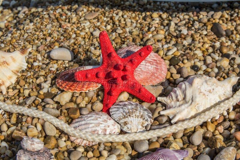 Coquilles d'étoiles de mer et de mer, corde blanche, mensonge sur le caillou multicolore photographie stock libre de droits