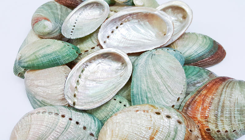 Coquilles d'ormeau photographie stock
