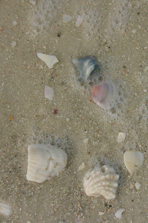 Coquilles dans la mousse d'océan photo libre de droits