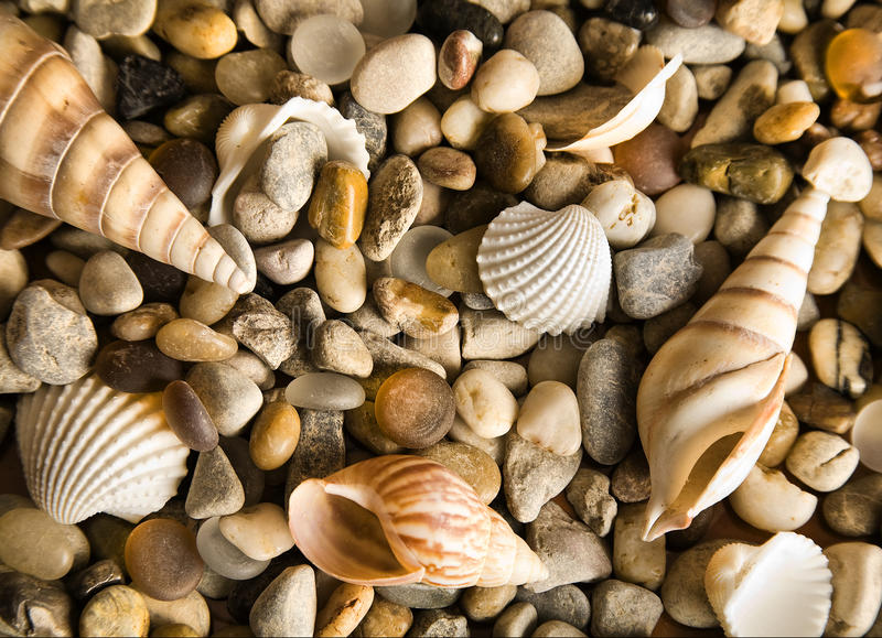 Coquilles de coque de mer photographie stock libre de droits