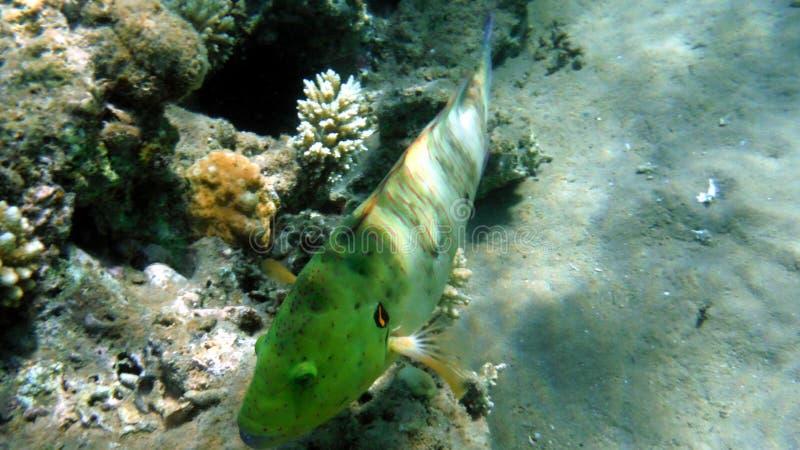 Coquilles de corail et poissons colorés photos libres de droits
