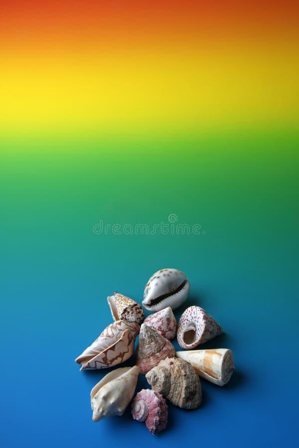 Coquilles de mer images stock