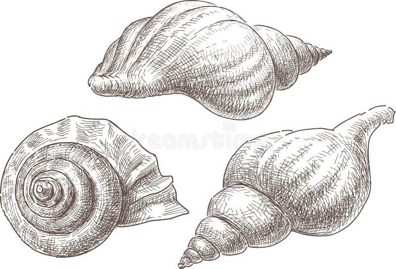 Coquilles de mer illustration stock