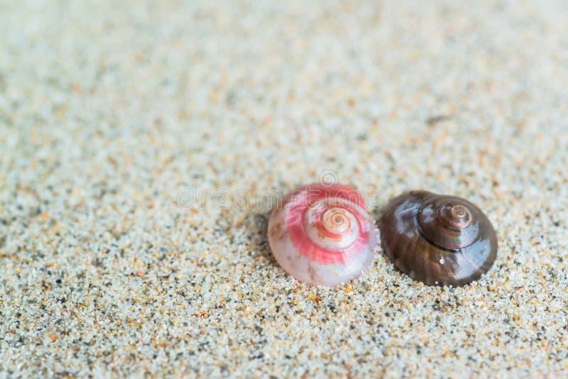 Coquilles de mer avec le sable image libre de droits