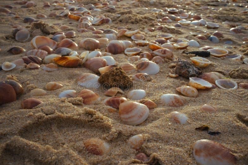 Coquilles de mer dans le sand#3 photographie stock