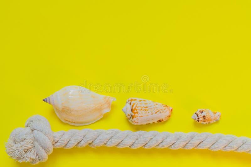 Coquilles de mer et noeud de corde sur le fond jaune lumineux avec l'espace de copie Vacances d'?t? et concept de vacances photo libre de droits