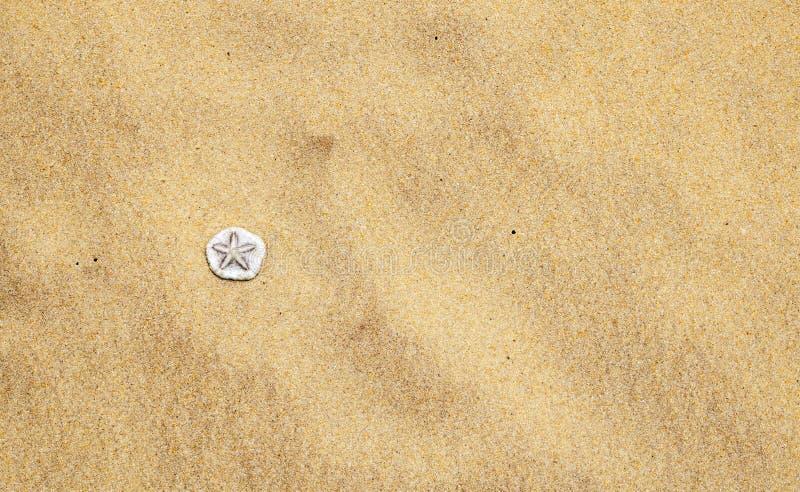 Coquilles de mer sur la plage de sable image stock