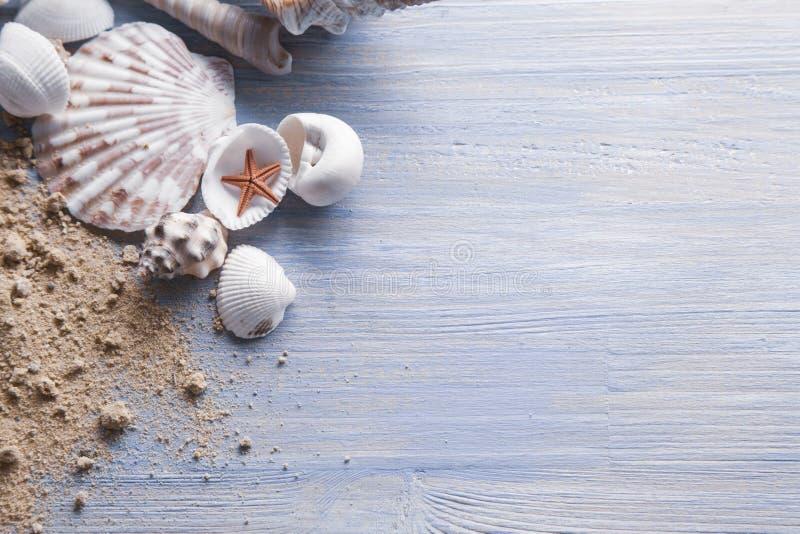 Coquilles de mer sur le fond du sable Plage d'été photographie stock libre de droits