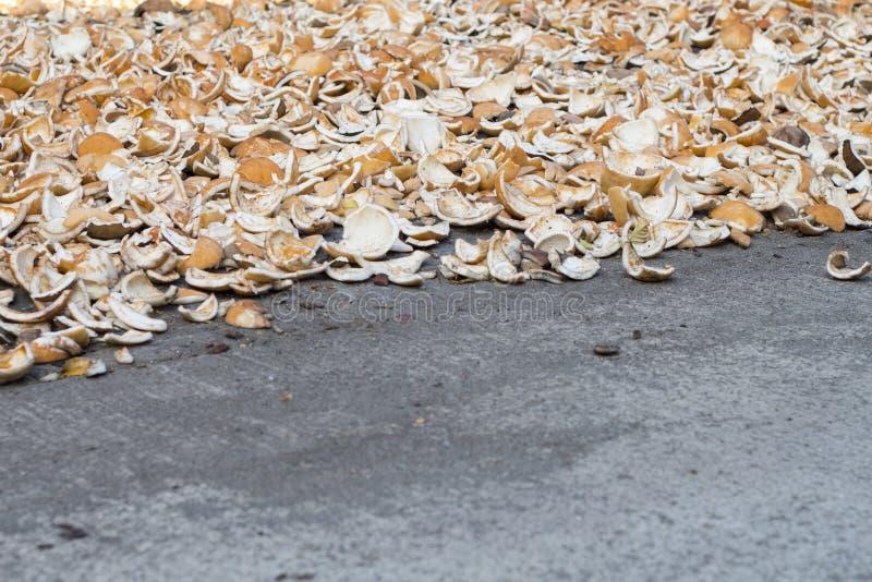 Coquilles de noix de coco sur l'asphalte gris Coprah de Cocos sec Fruit tropical faisant cuire l'ingrédient image libre de droits