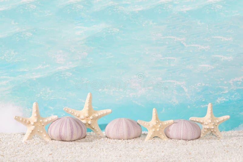 Coquilles de plage de bord de la mer images stock