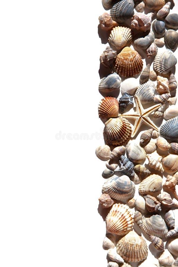 Coquilles et étoile de mer photos libres de droits