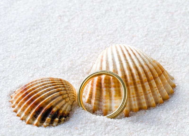 Coquilles et anneau photos libres de droits