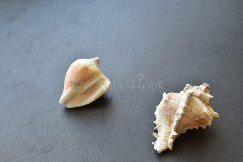 Coquilles et coquille de mer sur un fond noir image stock