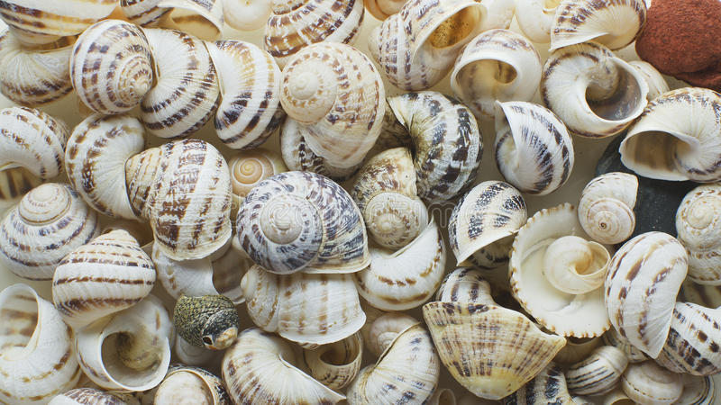 Coquilles marines images stock