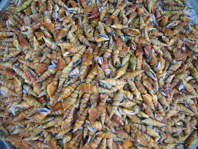 Coquilles Phuquoc Vietnam de fruits de mer photographie stock libre de droits