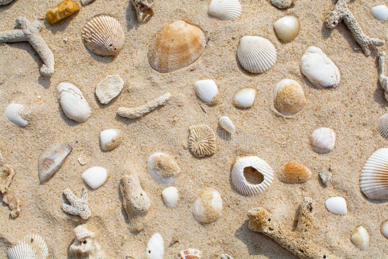 Coquilles sur la plage de sable images stock