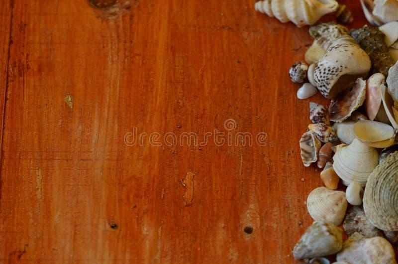 Coquilles sur le fond en bois brun photographie stock