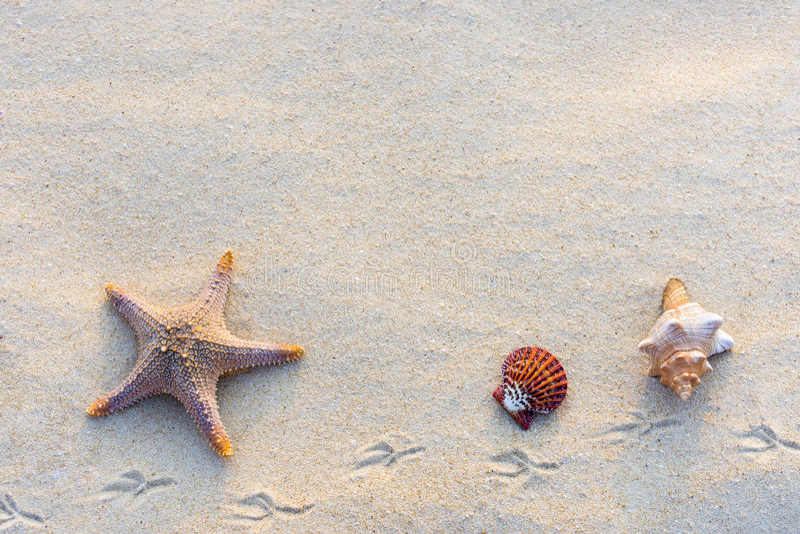 Coquilles sur le sable photo libre de droits