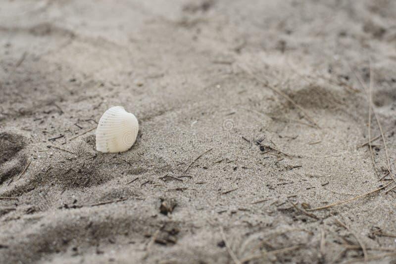 Coquilles sur le sable de plage photo libre de droits