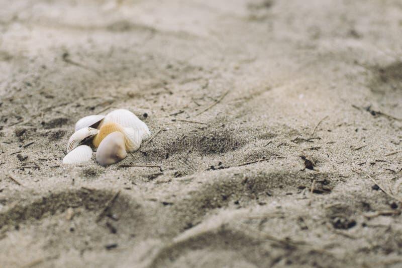 Coquilles sur le sable de plage image libre de droits