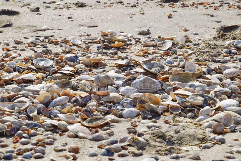 Coquilles sur le sable de plage de mer Sable côtier de mer sur la plage images libres de droits