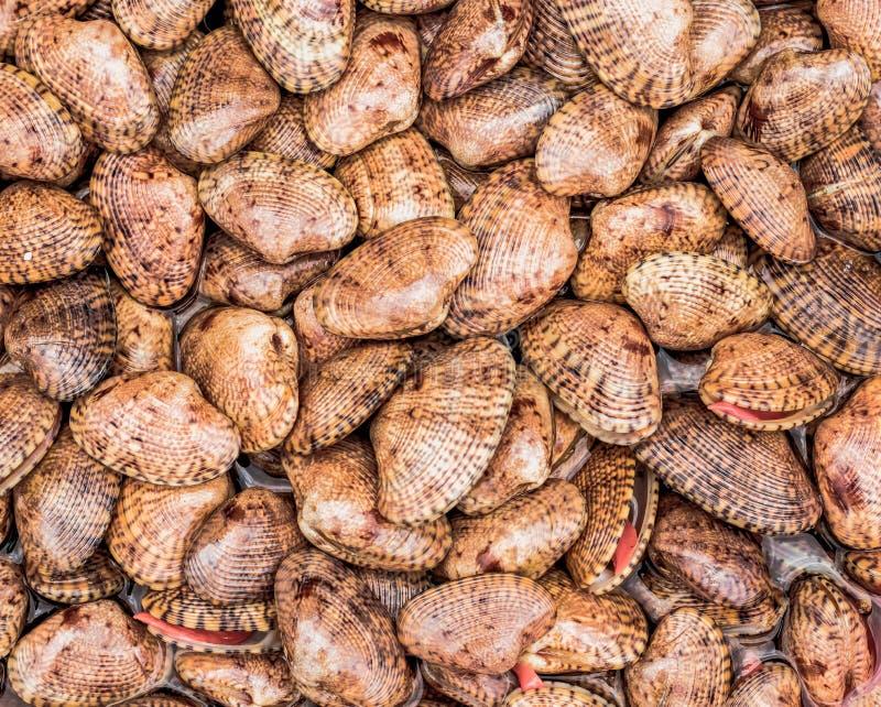 Coquilles vivantes dans une pile photo libre de droits