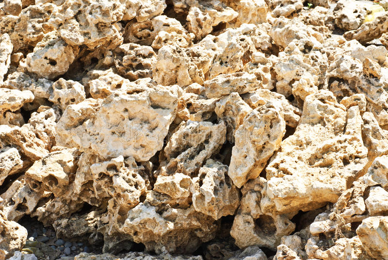 Coquina background. Grunge fossil limestone texture stock photo