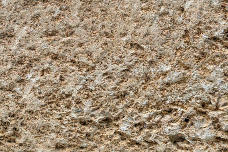 Coquina rock close-up, natural building material - limestone background stock photos