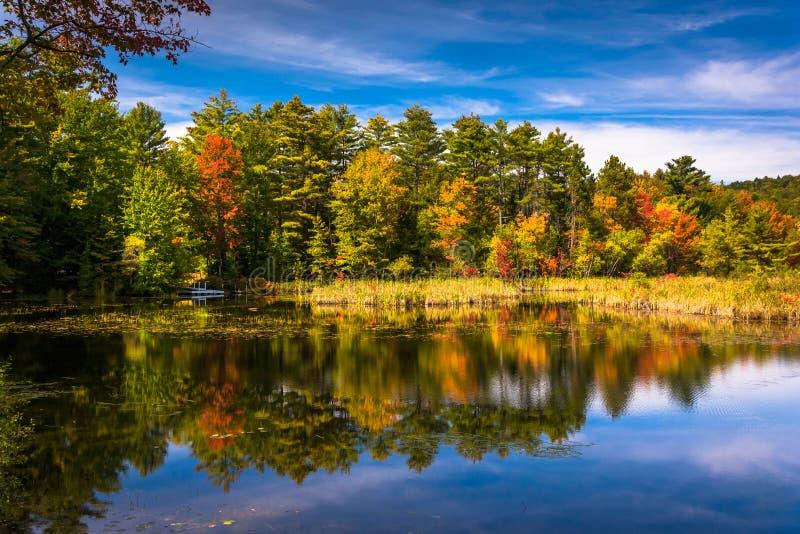 Cor adiantada do outono na lagoa norte, perto de Belfast, Maine fotografia de stock royalty free
