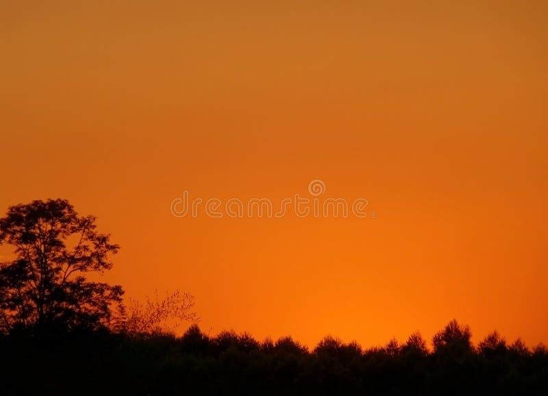 Cor alaranjada bonita do céu do por do sol sobre a silhueta da floresta do campo imagens de stock royalty free