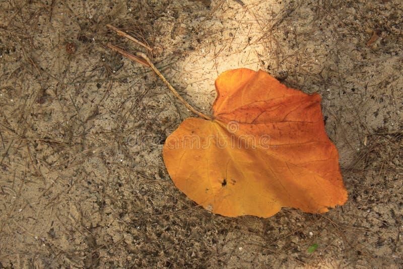 Cor alaranjada da mudança das folhas na estação imagens de stock royalty free