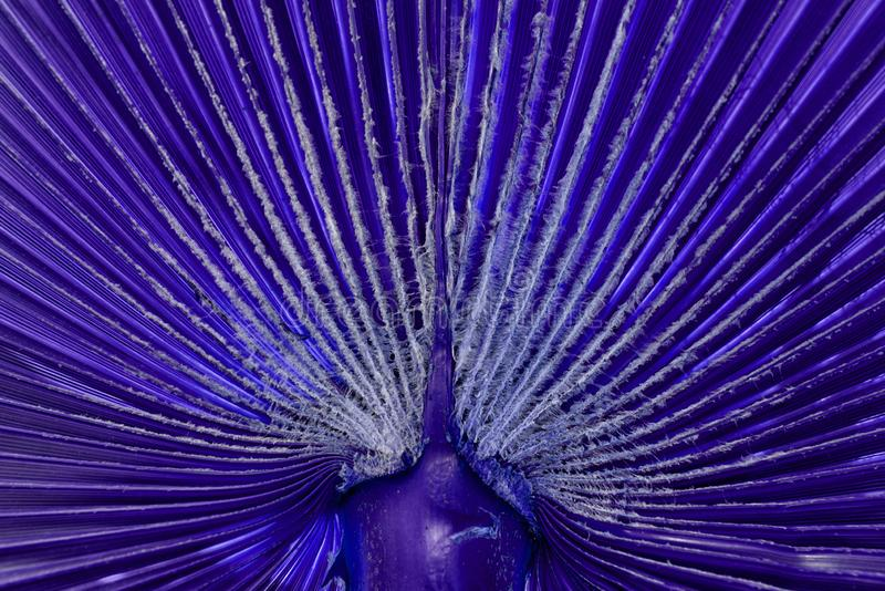 A cor azul escura deixa textura para fundo, Emerald Ripple Peperomia imagem de stock