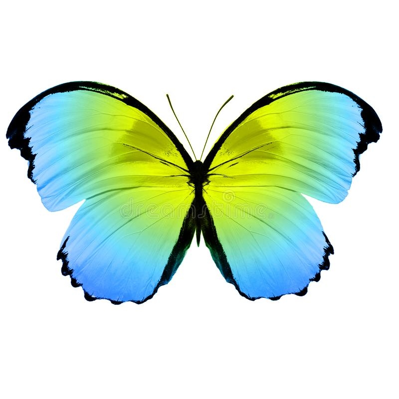 Cor bonita da borboleta fotografia de stock